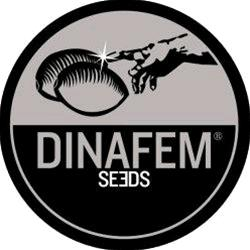 DINAFEM - FRUIT AUTO - 3 SEMI