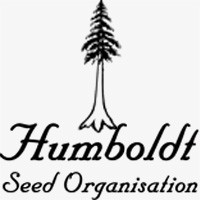 - NEW - HUMBOLDT SEEDS - BLUEBERRY HEADBAND FEMMINIZZATA - 5 SEMI