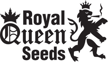 - NEW - ROYAL QUEEN SEEDS - EUPHORIA - MEDICINALE - 5 SEMI