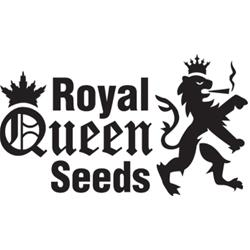 NEW - ROYAL QUEEN SEEDS - ROYAL AK AUTOMATIC - 3 SEMI