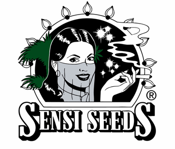 SENSI SEEDS - BLACK DOMINA REGOLARE - 10 SEMI